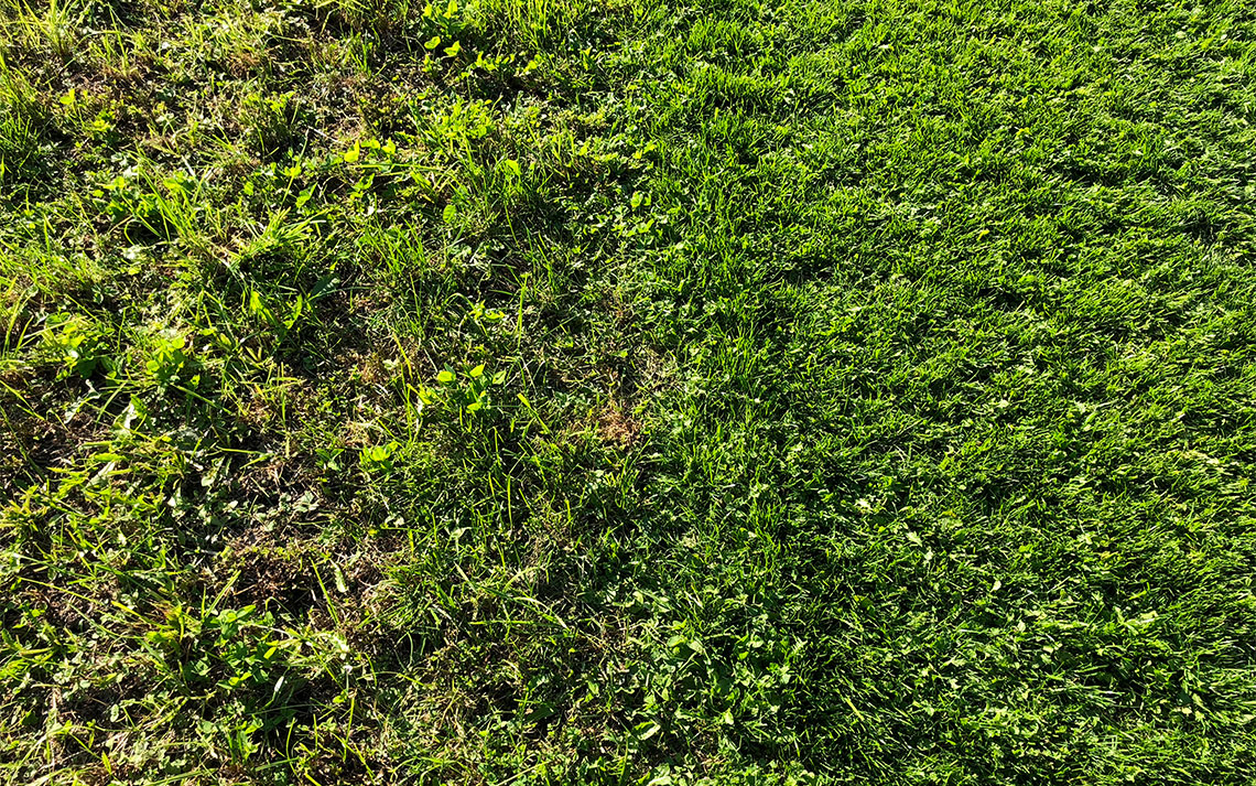 Rasen-Vorschaubild